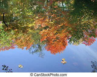 fall colours reflection on the water