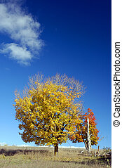 Fall Colours - Sunny Fall Day With A Big Sky