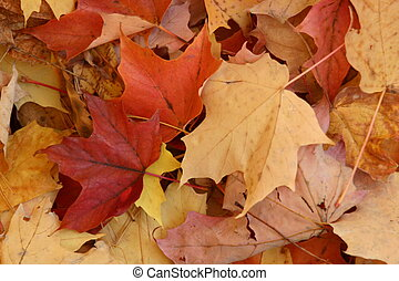 Fall colours - The many colors of Fall leaves