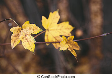 fall concept with yellow leaves