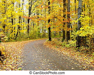This is a picture of a road in northern Michigan during the autumn season.