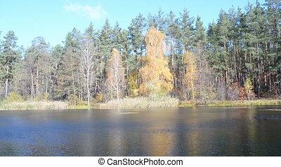 fall daylight landscape, autumn forest tree near water