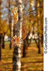 Fall dried leaves in autumn park