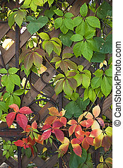 Fall fence 02