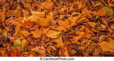fall., feuilles, mort