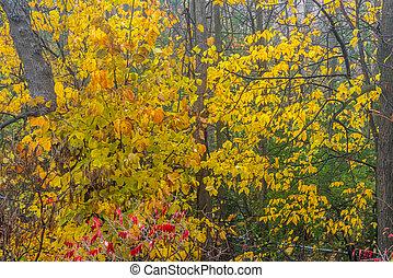 Fall foggy forest