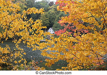 fall foilage with trees