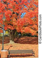 Fall foliage and wood bench