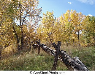Fall Foliage and Wooden Fence