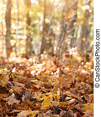 Fall Foliage Background with Copyspace