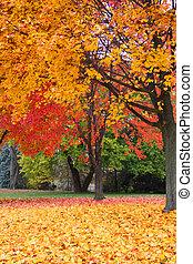 Bright fall foliage in Michigan