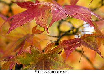 Colorful Foliage during the Autumn season.