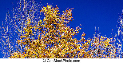 Fall Foliage Colors Against Blue Sky