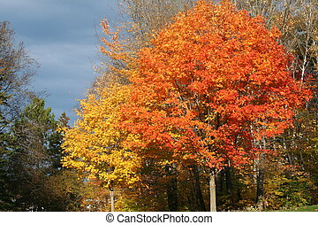 fall foliage - fall leaves against a dark sky.