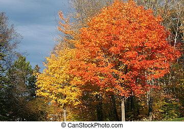 fall leaves against a dark sky.
