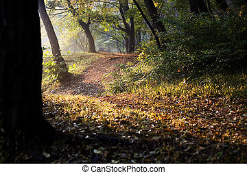 Fall foliage forest trails