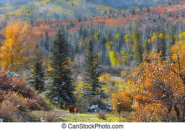Fall foliage in Colorado rocky mountains