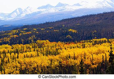 Fall foliage in Denali National Par