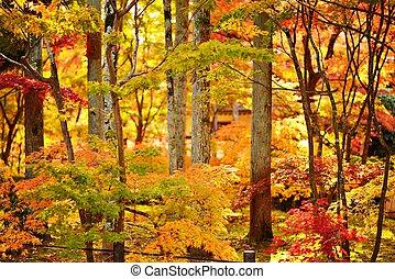 Fall Foliage in Kyoto - Fall foliage at Eikando Temple in...