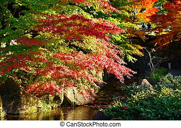 Fall Foliage in Nagoya, Japan - Fall foliage at in Nagoya, ...