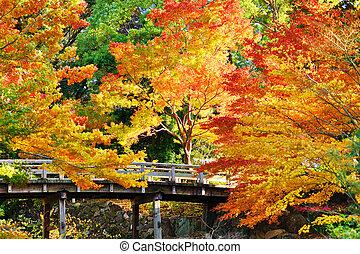 Fall Foliage in Nagoya, Japan - Fall foliage at in Nagoya,...