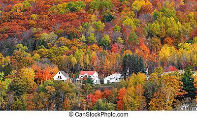 Fall foliage in Quebec mountains along scenic highway 155 in Quebec, Canada