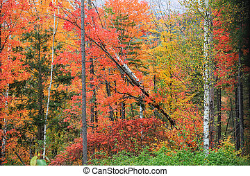 Fall foliage in rural Vermont state