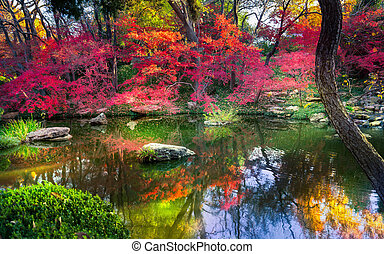 Fall Foliage in Texas - A burst of fall color with pond...