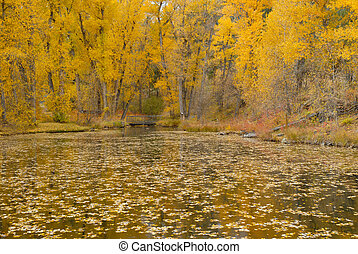 Fall foliage in the forest, Rocky Mountains, USA