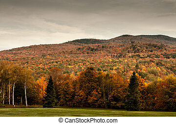 mountain in Vermont - Fall foliage on a mountain in Vermont