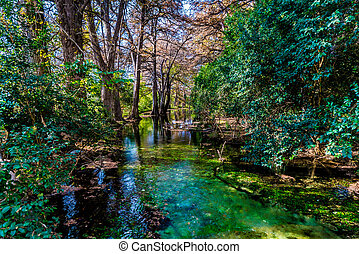 Fall foliage on the crystal clear Frio River in Texas. - ...
