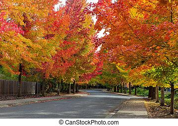 Fall Foliage on Tree Lined Suburban Neighborhood Street