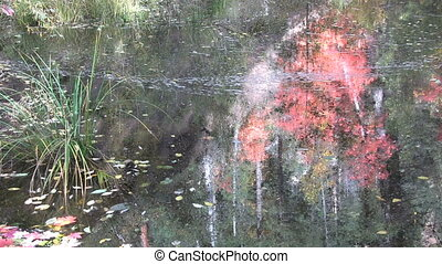 Fall Foliage Reflected in Stream