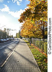 Fall foliage road. Colorful background. Outdoor abstract background.