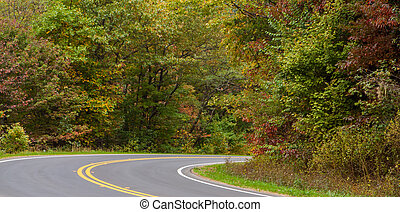 fall foliage road way