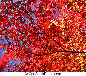 Fall Foliage - Fall foliage leaves and branches