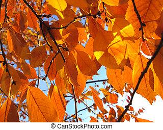 fall foliage  - beautiful fall foliage of the tree