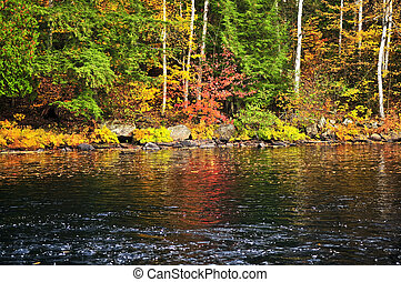 Fall forest and lake shore