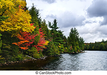 Fall forest and lake shore - Lake shore of fall forest with ...