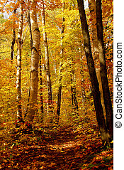 Fall forest background with hiking trail