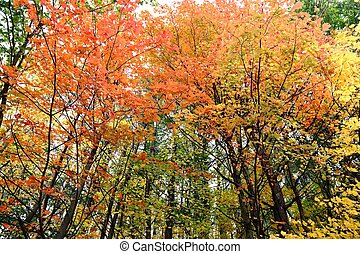 fall forest colors