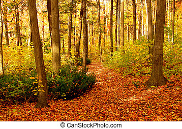 Fall forest landscape - Colorful sunlit fall forest with ...