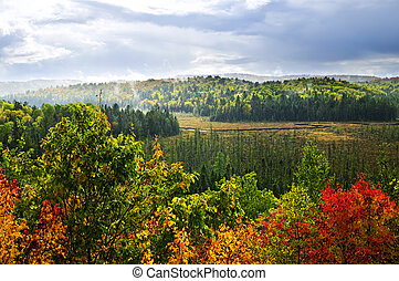 Fall forest rain storm - High view of fall forest with...