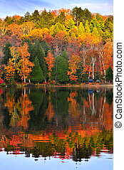 Fall forest reflections - Forest of colorful autumn trees ...