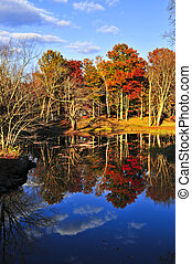 Fall forest reflections - Forest of colorful autumn trees...