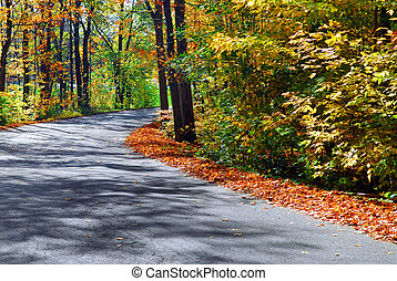 Fall forest road - Curving road in a colorful fall forest