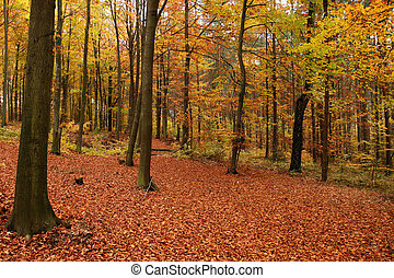 Fall forest.