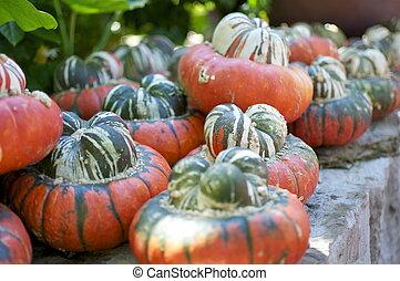 Fall - Gourds