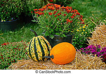fall gourds and pumpkins