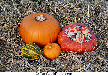 Fall gourds and squashes with orange pumpkins